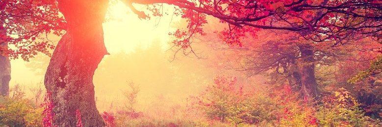 Magisk efterårsskov med sol